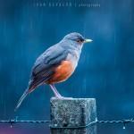 Last winter rain @ Ivan Gevaerd on 500px.com